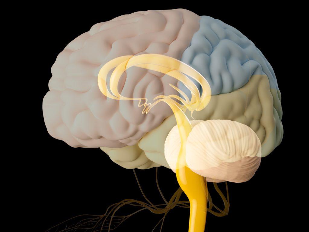 脳に効く思考改善良書